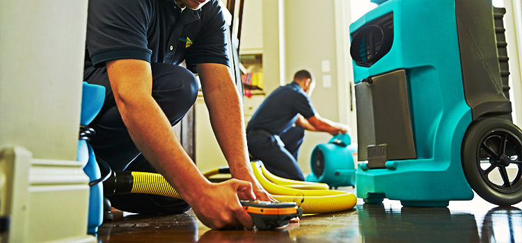 Business Specializing in Water Damage and Mold Removal